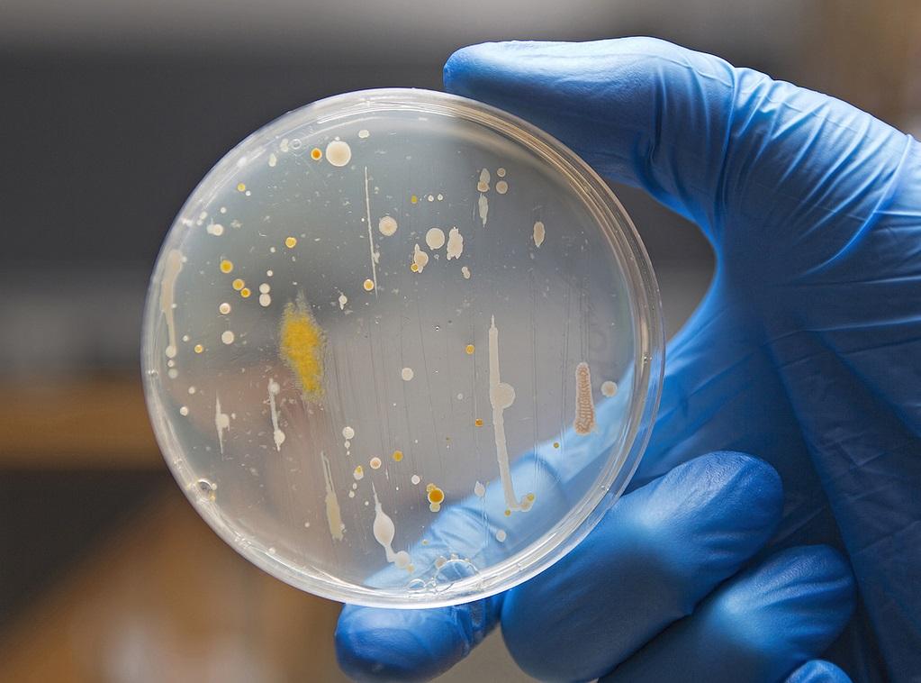 Badania czystości mikrobiologicznej kosmetyków