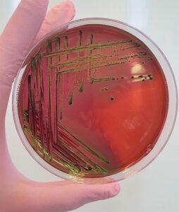 badania produktów do dezynfekcji rąk